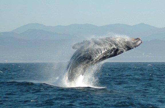 На берег Белого моря выбросился кит
